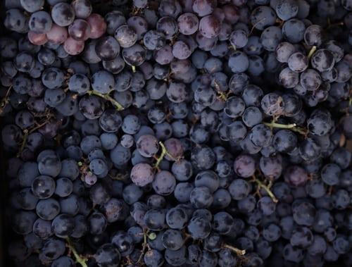 Wein selber herstellen
