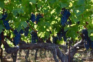 Histaminarmer Wein