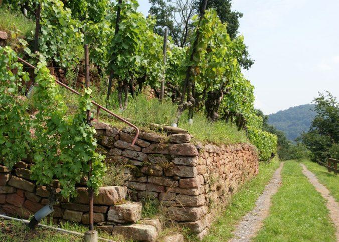 Biodynamischer Weinbau