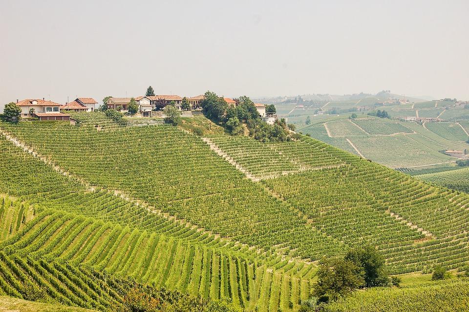 Italienischer Wein
